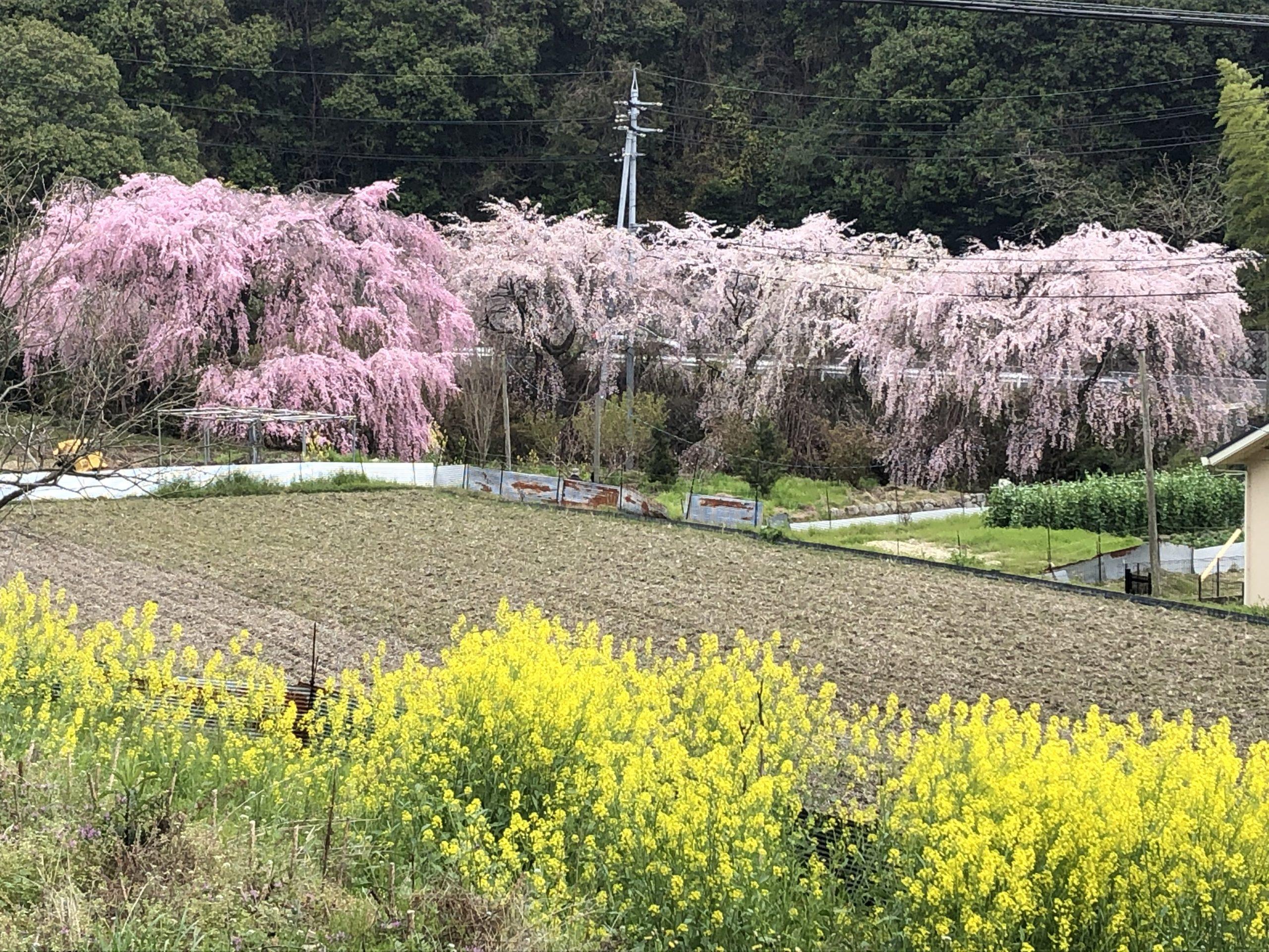 綺麗な花々と、春らしいキット